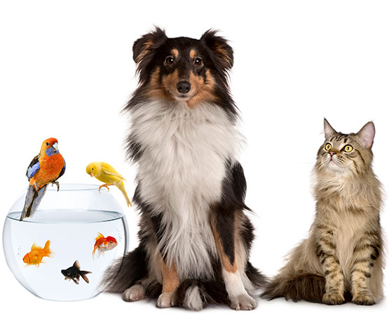 Pet care sector image